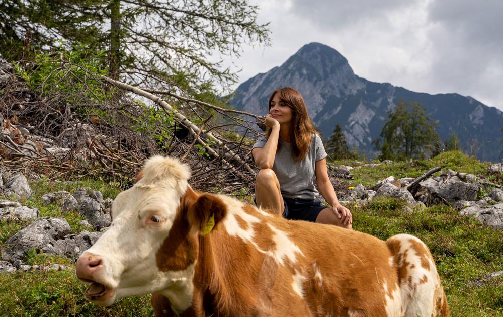 Kühe auf dem Wanderweg zur Katrin Alm