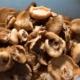 Beim Hallimasch nur Pilzköpfe kochen