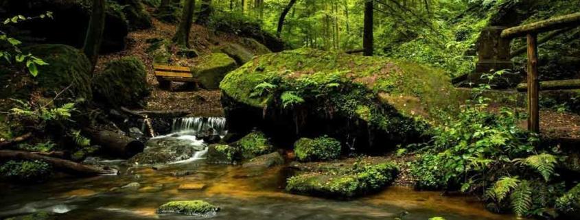die zehn schönsten Wälder Deutschlands von Instagram