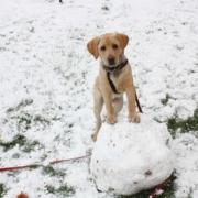 Hunde als Haustiere für Kinder - die besten Familienhunde