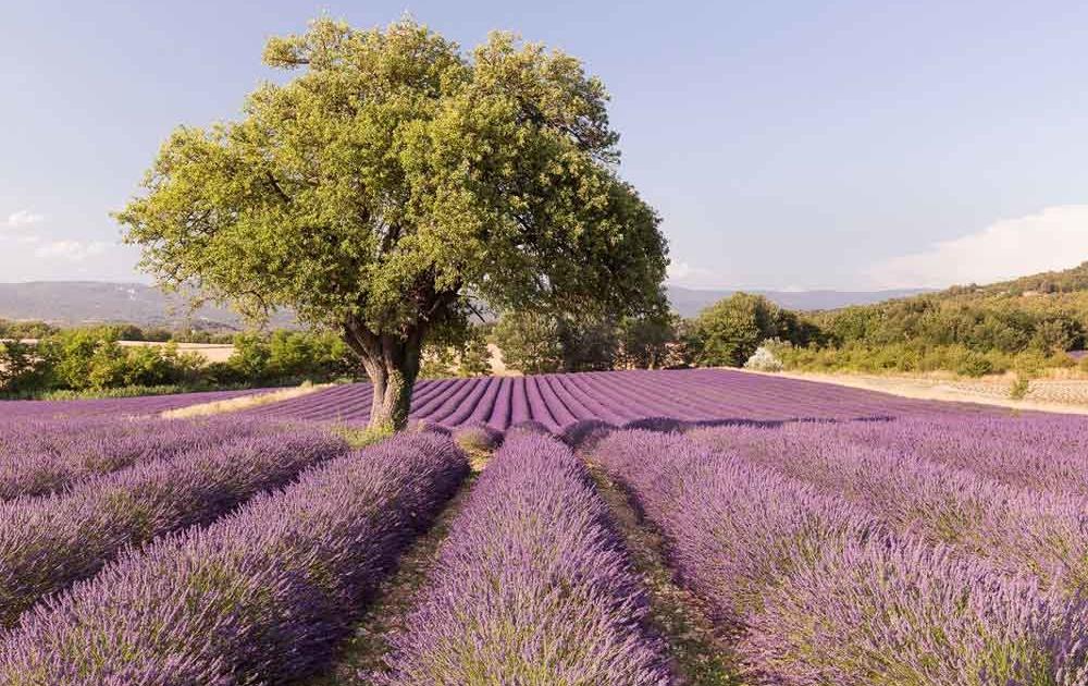 Roseweine aus Luberon Tor zur Provence