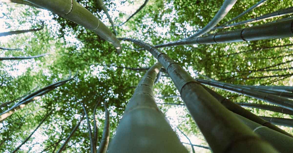 Terrassendielen aus Bambusgräsern