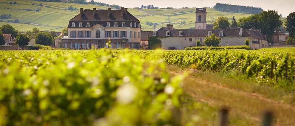 Cave de Bailly: Cremant-Spezialist Nord-Bourgogne